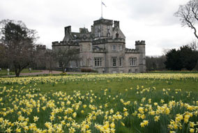 Winton House in bloom with thousands of daffodils carpeting the gardens