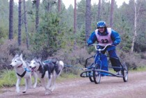 2 dog Siberian Husky Dog Racing. Exclusively at Winton House.