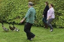 Dog & duck herding at Winton House.