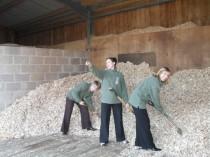 Events team helping rake woodchips for biomass boiler.