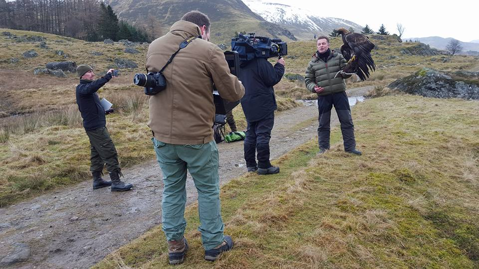 Stanley the Golden Eagle on Winterwatch - Winton Open Day 10 April 2016.